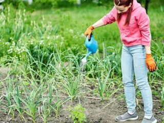 girl child with pigtails doing yard work - watering garden, making money in the summer