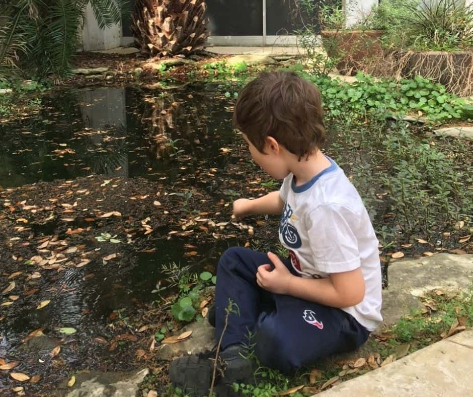 preschooler with stick poking near where frog eggs were found in a really small pond